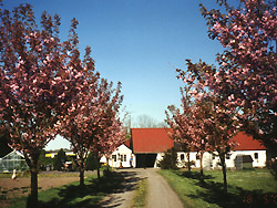 Bornholm: Folkemøde overnatning Sommerhus, Feriehus, Hotel, Pension  -  Frydenlund
